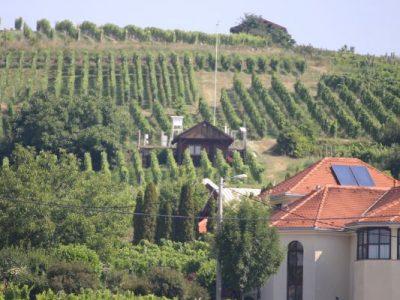 Produžen rok za prijave konverzije i restrukturiranja vinograda