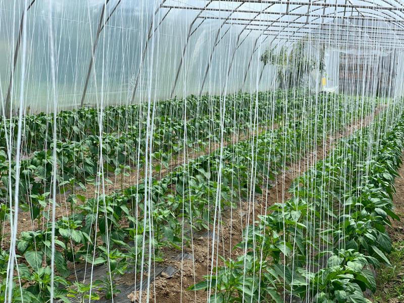 Obitelj Budić iz Ciglenika već dugi niz godina bavi se različitim djelatnostima, ali pretežito povrtlarstvom. Cijela obitelj sudjeluje u obavezama vezanim uz poljoprivredu