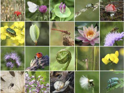 NAJAVA NOVE RUBRIKE: Biljni i životinjski svijet
