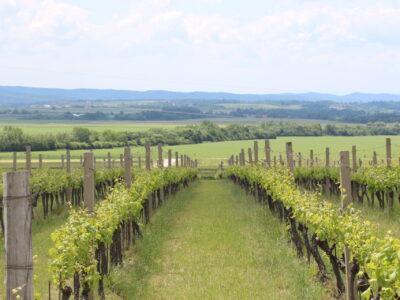 Obavijest proizvođačima povrća, vinogradarima i voćarima